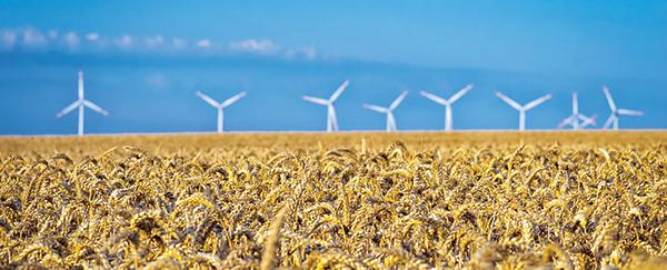 Foto: Weizenfeld mit Windrädern im Hintergrund